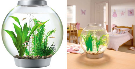Ensembles aquariums et aquariums design maganimaux for Aquarium en boule