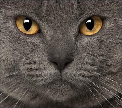 Les chats tuent des milliards d'animaux