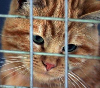 A la SPA, moins d'un chat sur dix retrouve son maîtr