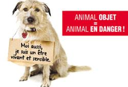 Pétition - 2013 : année d'un nouveau statut juridique de l'animal ?