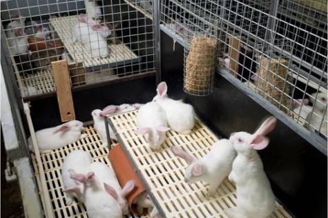 L'Europe dit adieu aux tests sur les animaux