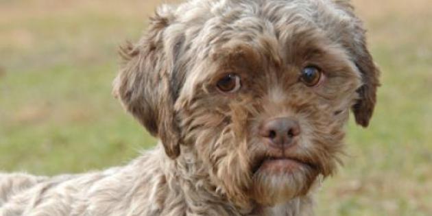 Tonik, le chien au visage humain