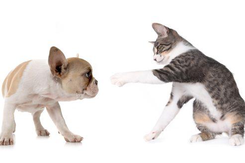 Soigner les vers chez le chien et le chat