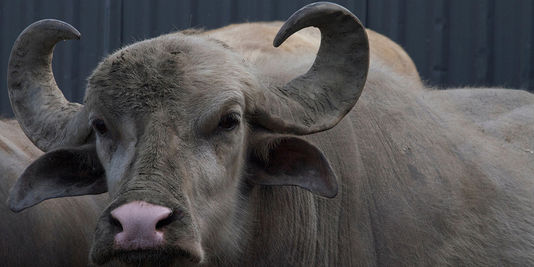 """""""Bestiaire"""" : réapprendre à regarder les animaux"""