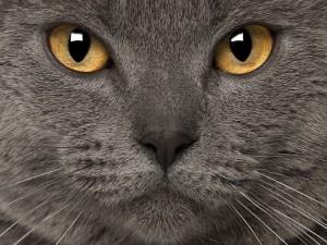 Une personne sur cinq préfère câliner son chat plutôt que son partenaire