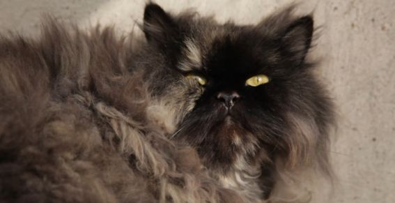 Un chat fait 5.500 kilomètres caché dans le bagage de sa propriétaire