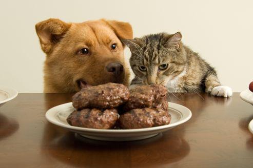 Chien et chat : alimentation ménagère ou industrielle ?