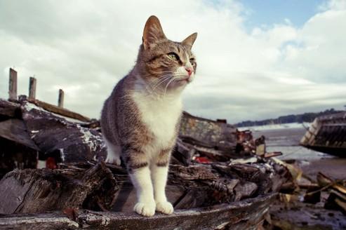 Le chat, meilleur ami du marin