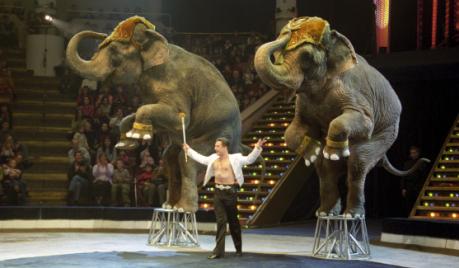 Le dressage au cirque : humanisme et licence