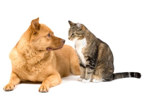 Chiens et chats : gérer les crises d'épilepsie