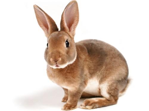 Vers la fin des cosmétiques testés sur les animaux