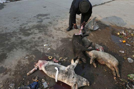 A Shanghaï, des milliers de cochons morts au fil du fleuve