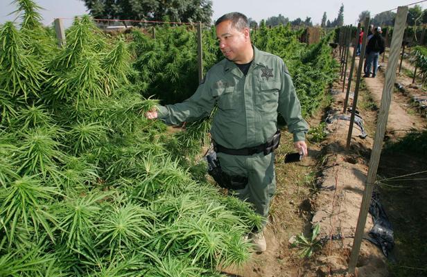 La marijuana pourrait menacer la vie de plusieurs animaux