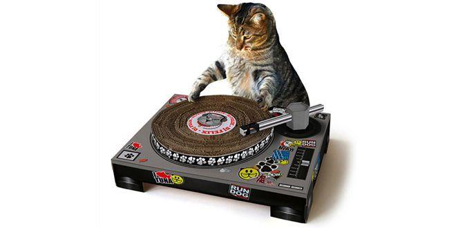Transformer son chat en Dj Scratch Cat ? C'est possible !