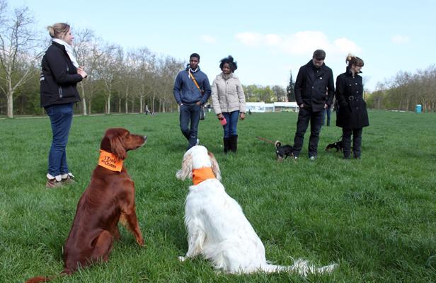 L'Ecole des chiens remet les toutous dans le droit chemin