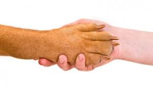 Le décryptage de votre contrat d'assurance santé animale