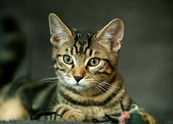 Un chat disparu lors de l'ouragan Sandy retrouve sa maison six mois plus tard!