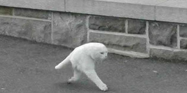 """L'étrange """"demi-chat"""" de Google Street View agite le web"""