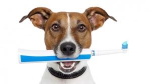 Attention à l'hygiène dentaire des chiens et chats