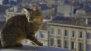 Mistigri, le chat qui explore Bordeaux