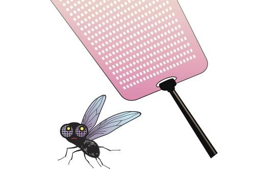 Des mouches industrielles pour nourrir les animaux