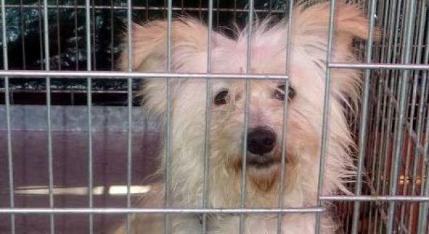 La SPA impuissante face aux propriétaires bourreaux d'animaux