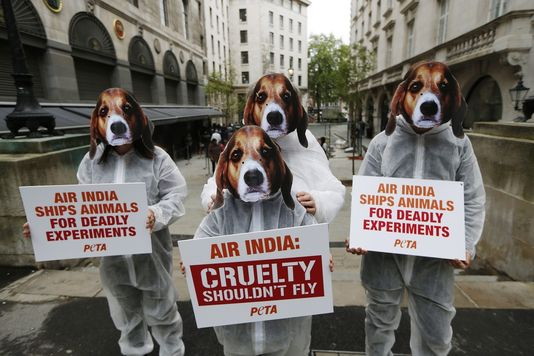 Les animaux ont le droit d'être bêtes