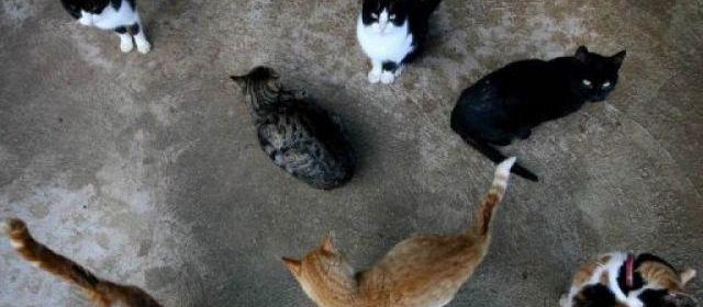 """Bientôt un """"bar à chats"""" à Paris, les défenseurs des animaux s'inquiètent"""