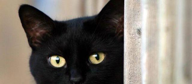 Lyon : Bob le chat parcourt 20 km pour rejoindre ses maîtres