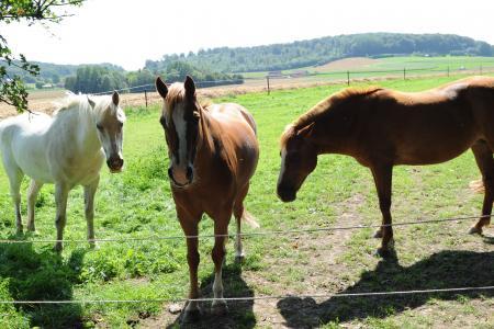 Boussu: dernière commune à taxer un animal de compagnie