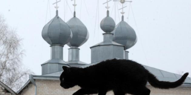 Russie : un chat fait de la contrebande de portables dans une prison