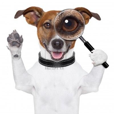 Garder votre chien en bonne santé