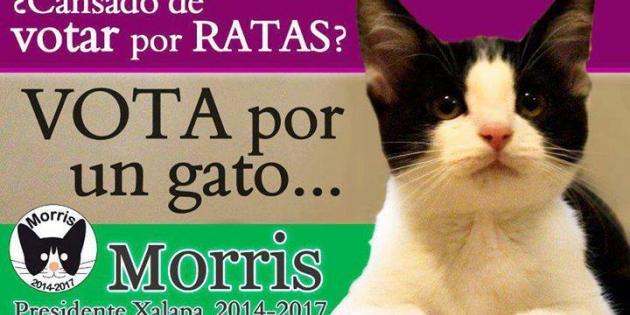 """Mexique : un chat en campagne contre les """"rats"""""""