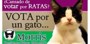 MEXIQUE. Morris, le chat candidat aux élections municipales