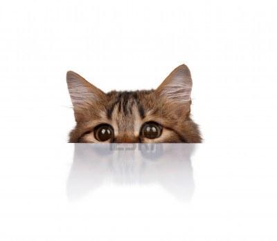Les problèmes d'oreille du chat