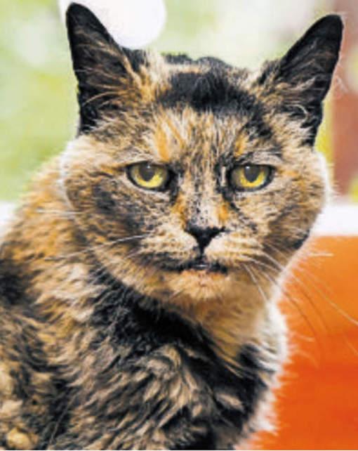 Le plus vieux chat du monde est mort