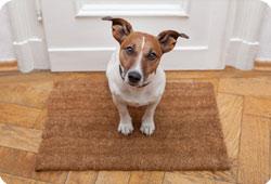 Comment préparer votre animal à votre absence ?