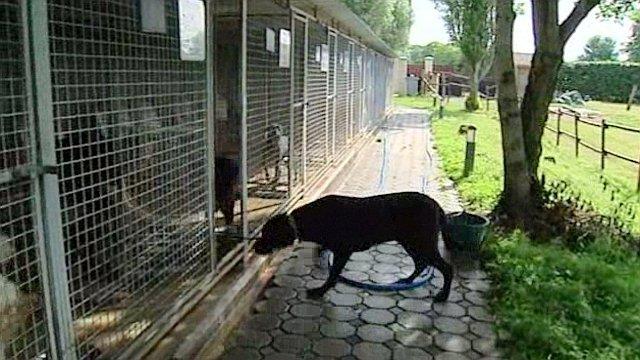 SPA : les abandons de l'été n'épargnent plus les animaux de race