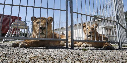 Bientôt plus d'animaux sauvages dans les cirques en Belgique