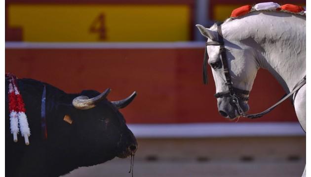 Arno Klarsfeld s'engage pour les animaux: les politiques, eux, sont rongés par les lobbies