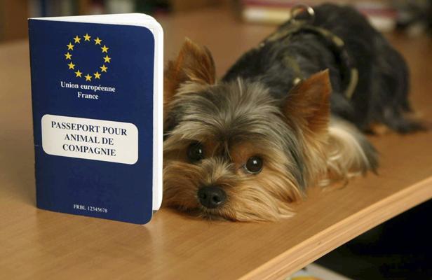 Vacances: Pensez au passeport pour votre chien