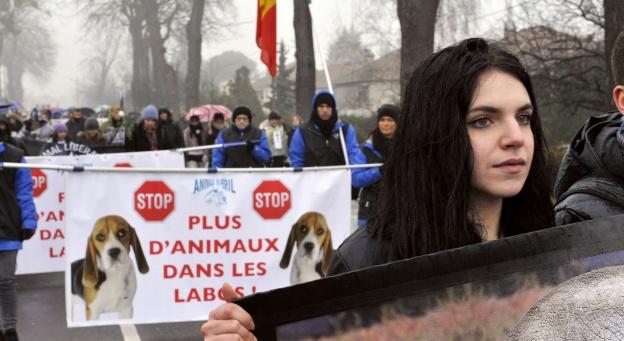 Belgique: moins d'animaux dans les laboratoires en 2012