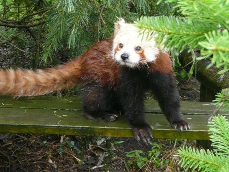Canicule : au zoo d'Amnéville, on rafraichit les animaux !