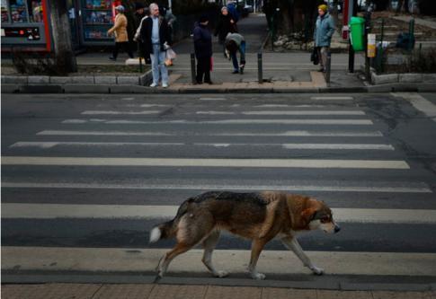Colombie – Le chien errant qui défie la loi