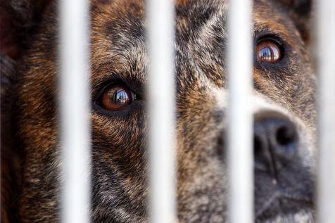 La SPA envisage des «familles d'accueil» pour de vieux animaux