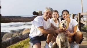 Les dangers qui guettent les chiens et les chats durant l'été