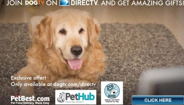 """""""DogTV"""", la télé pour chien : humains et canins, un même public ?"""