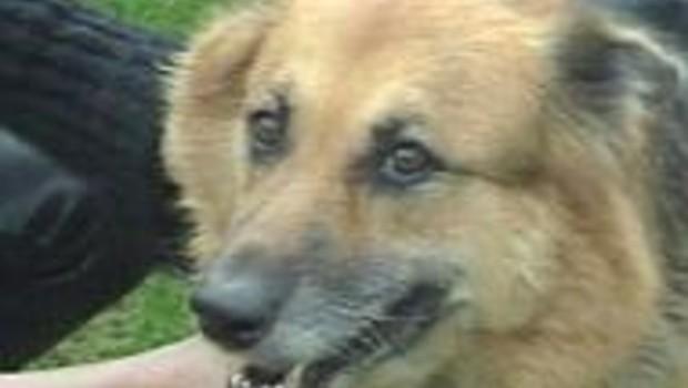 L'homme a plus d'empathie pour son chien que pour son semblable