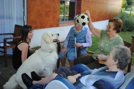Des animaux qui soignent Alzheimer