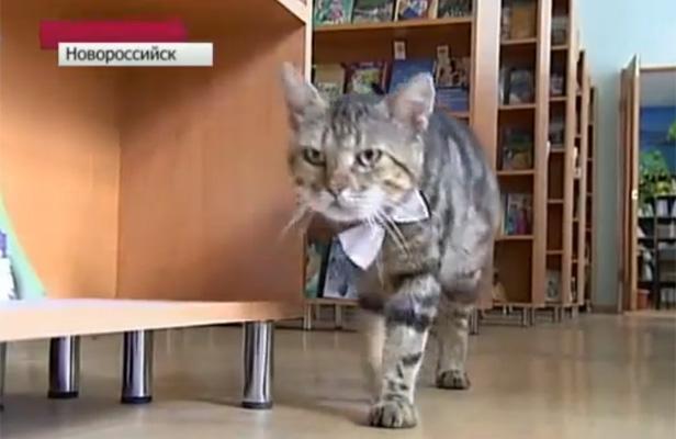 Russie: Un chat promu assistant bibliothécaire